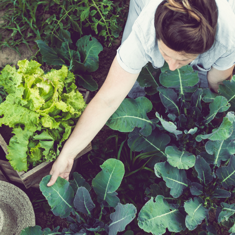 An appetite for change? National Food Strategy launches radical UK food system overhaul