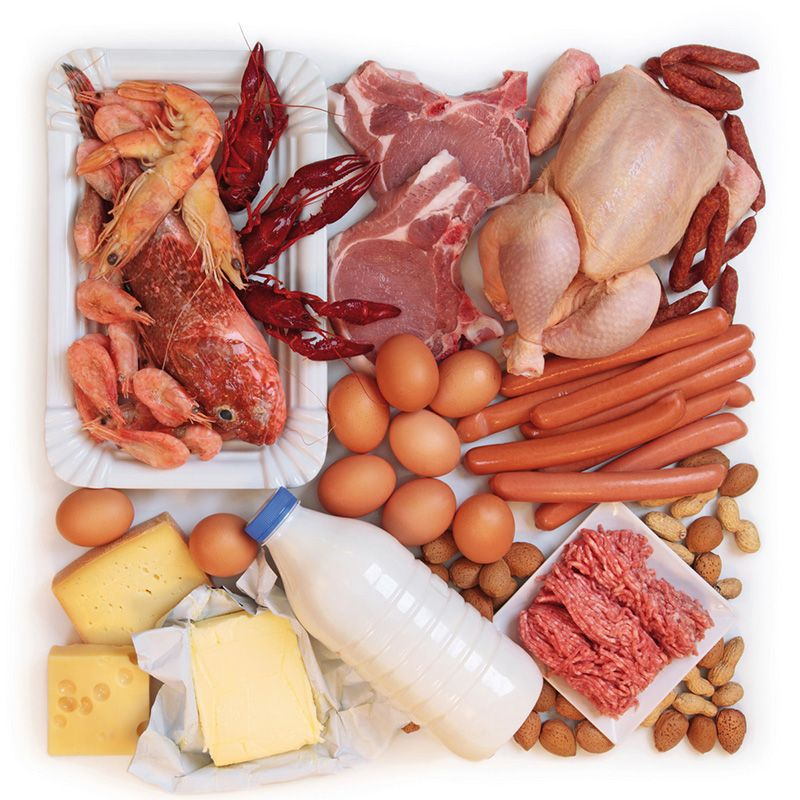 protein meat based diet
