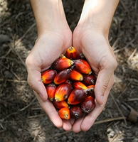 636725152707229957palm oil new.jpg