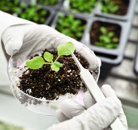 Essential tools? Bio-tech touted as key to providing the planet with nutritious foods