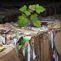 "Paper-based packaging: Environmental benefits and ""natural"" aesthetics drive growth"