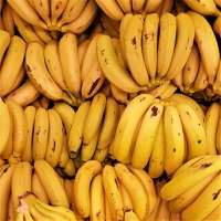 """Banana producers in South America are urging international retailers to address the global issue of """"spiralling inflationary prices"""" affecting production costs."""